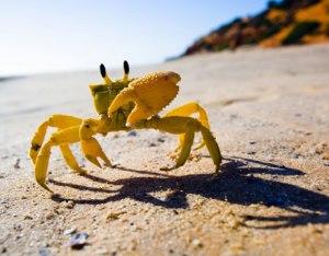 beach-crab-ocean-lg