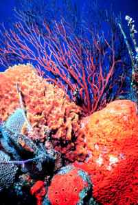 Coral-Reefs-sea-life-114579_700_1042