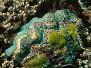 giant-clam_541_600x450