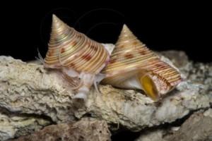 Snails-457x305