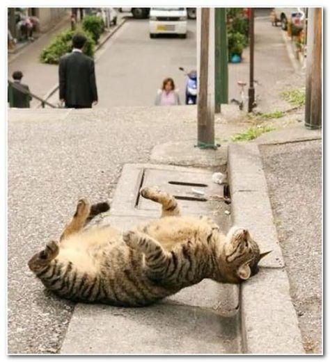 funny-cat-25_1