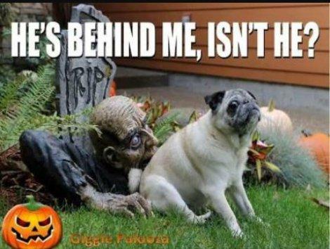 halloween-9-pug