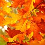 fall4