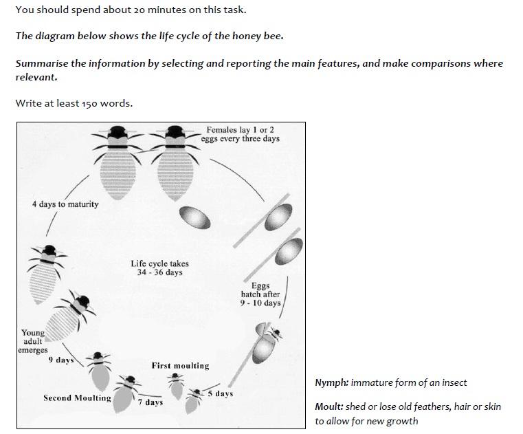 Egg Honey Bee Diagram - Basic Guide Wiring Diagram •