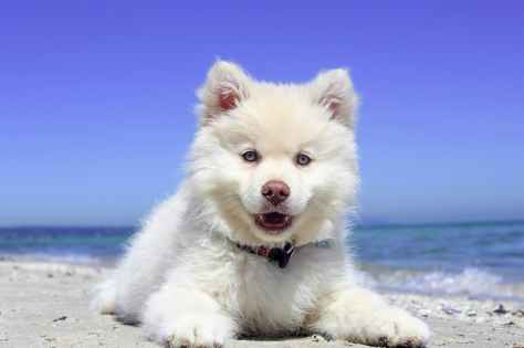 adorable animal beach canine
